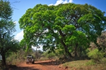 Nature Limpopo