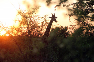self catering kruger national park accommodation